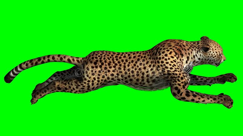 Der Gepard springend in Front auf einem grünen Hintergrund lizenzfreie stockfotografie