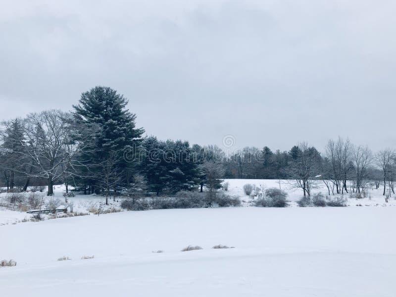 Der Gewann durchgesetzt mit Schnee stockfotografie