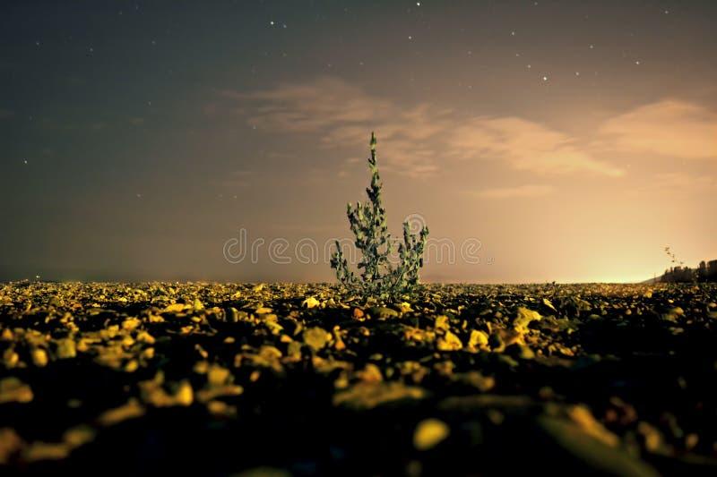 Der goldene Garten lizenzfreie stockfotos