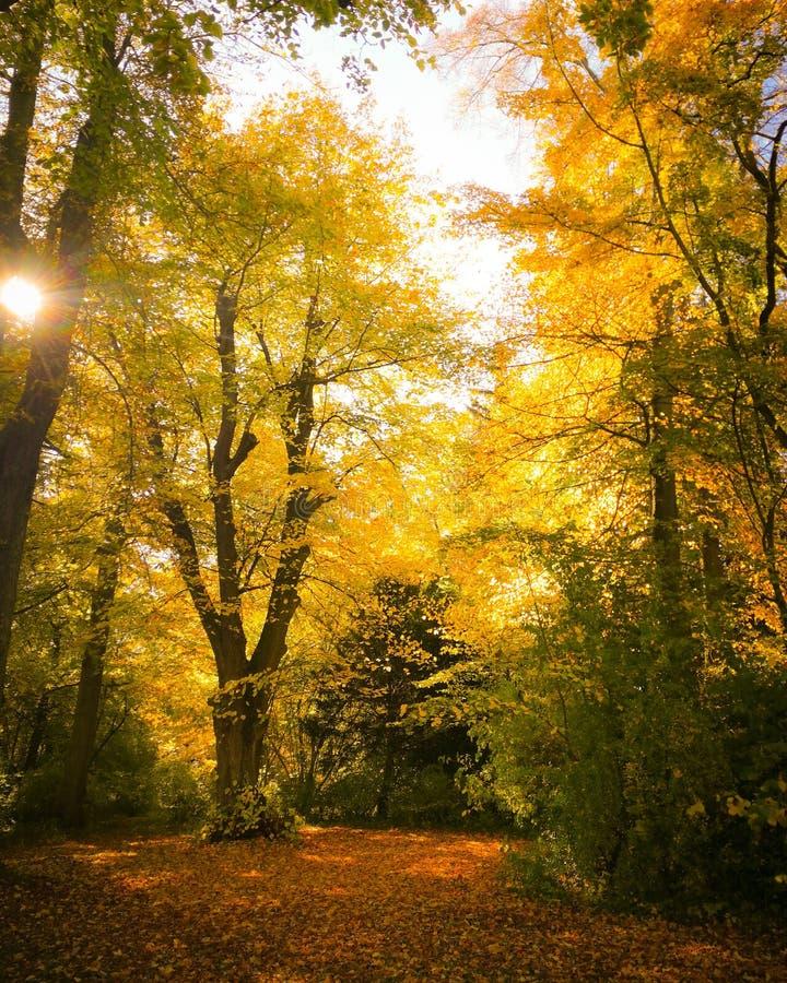 Der goldene Herbst stockbild