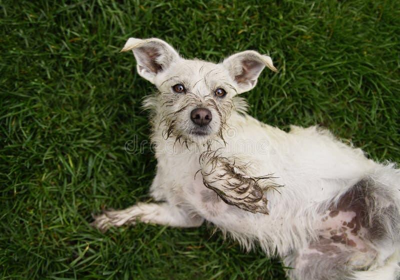 Der Gopher, der Loch-grabenden Hund jagt stockfotos