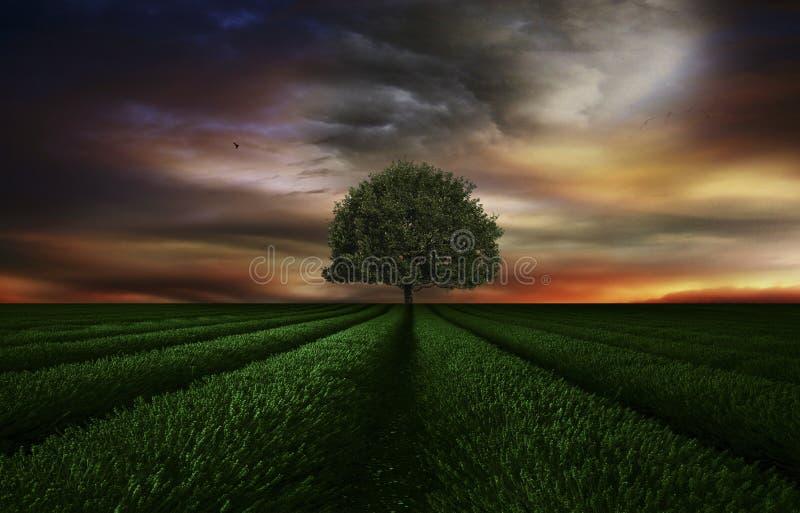 Der grüne Baum lizenzfreie stockfotografie