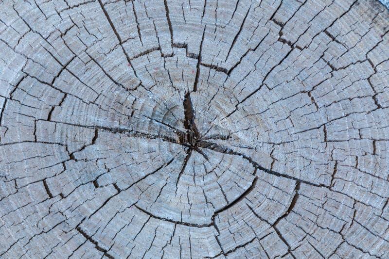 Der graue Holz- oder Bauholzhintergrund oder Beschaffenheit des cutted weg alten faulen Baums stockbild