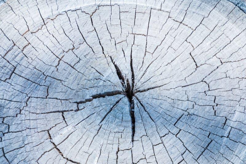 Der graue Holz- oder Bauholzhintergrund oder Beschaffenheit des cutted weg alten faulen Baums lizenzfreies stockfoto