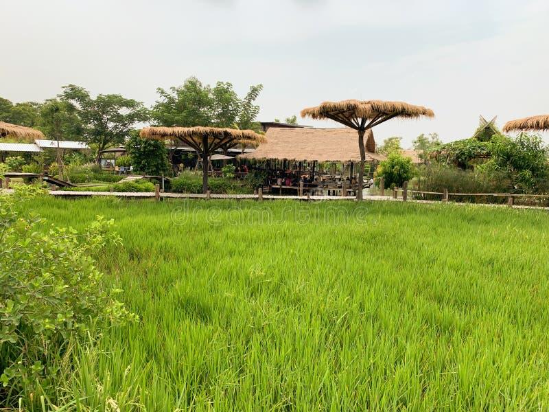 Der große grüne Feldhintergrund stockbild