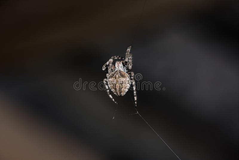 Der große Spinnenanfang, zum es zu spinnen ist Netz lizenzfreie stockfotografie