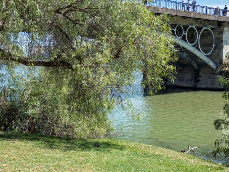 Der Guadalquivir-Fluss, der Sevilla im Süd-Spanien durchfließt Flussbank mit Baum lizenzfreie stockbilder