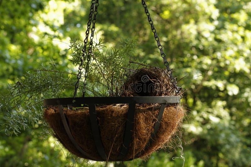 Der hängende Kettenpflanzer mit Nest stockfotos