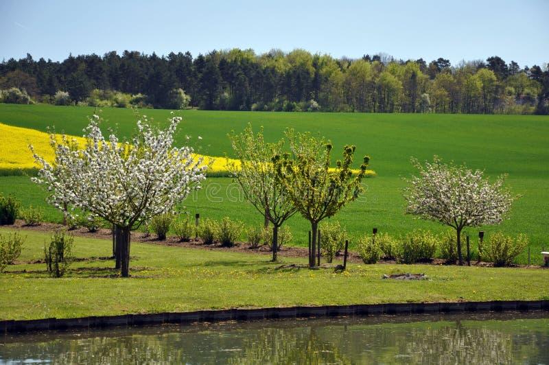 Der hübsche Obstgarten lizenzfreie stockfotos