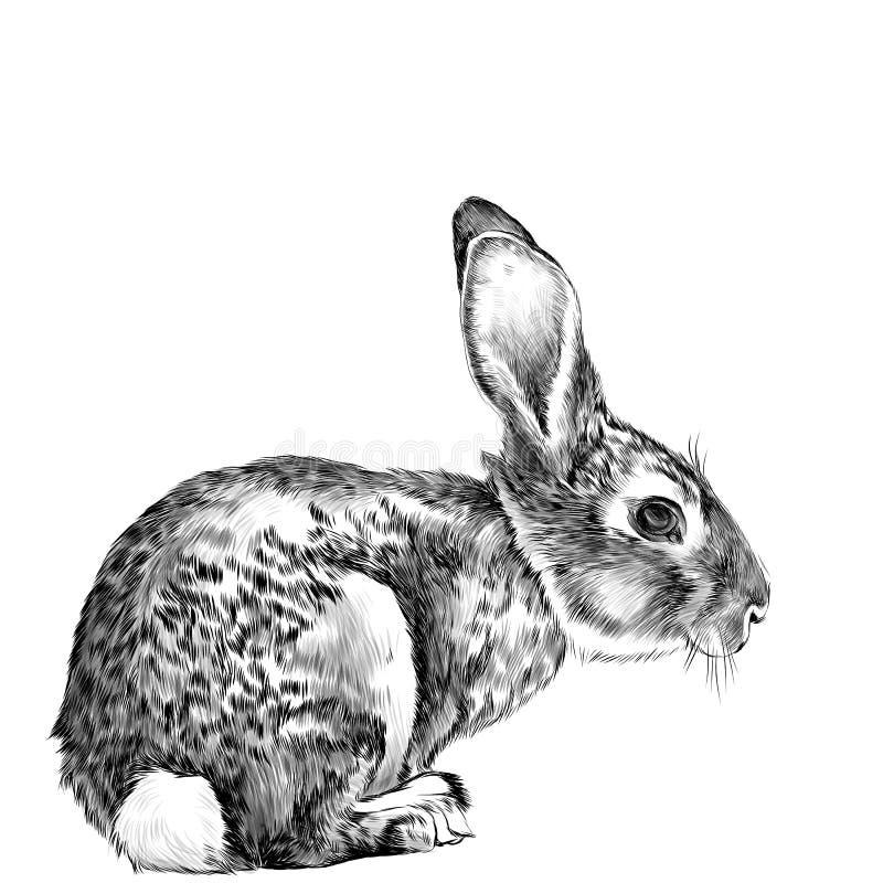 Der Hase im vollen Wachstum sitzt seitlich Skizzenvektor lizenzfreie abbildung