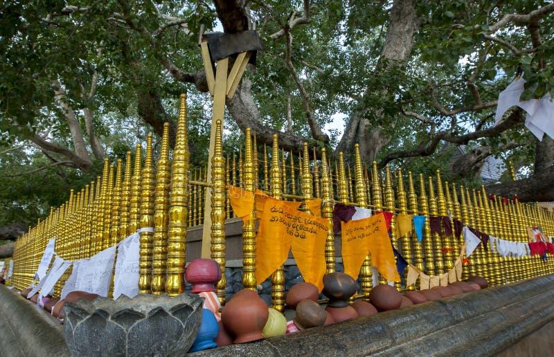 Der heilige Bodhi-Baum in Kataragama stockfotografie