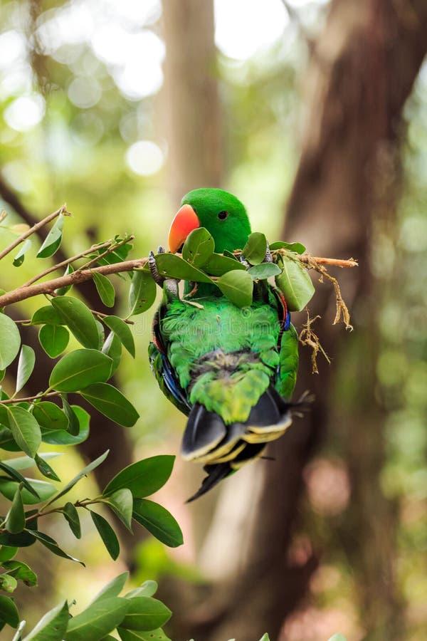 Download Der Hell Mit Federn Versehene Papagei Stockfoto - Bild von betriebe, flugwesen: 106802204