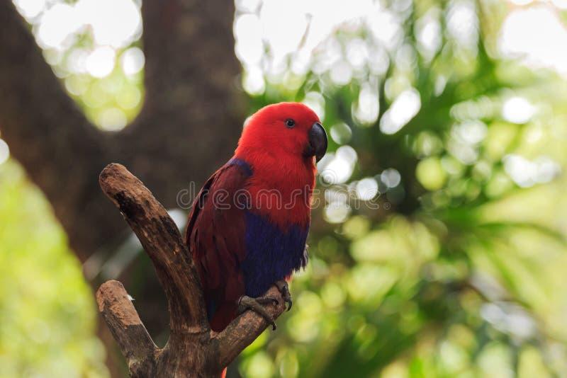 Download Der Hell Mit Federn Versehene Papagei Stockbild - Bild von wälder, lang: 106802239