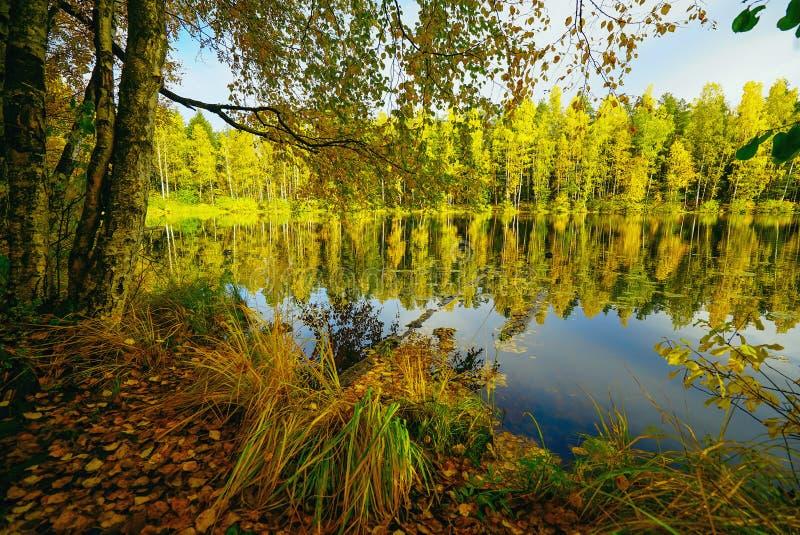 Der helle Sonnenschein hob die gelben Bäume durch den See hervor Autumn Landscape lizenzfreie stockbilder