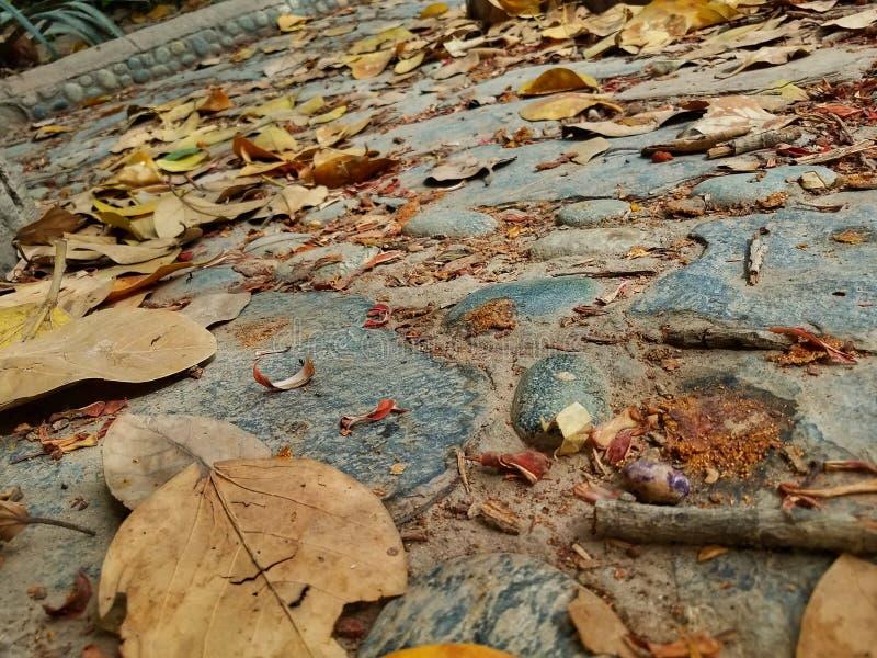 Der Herbst ist sch?n stockfotografie