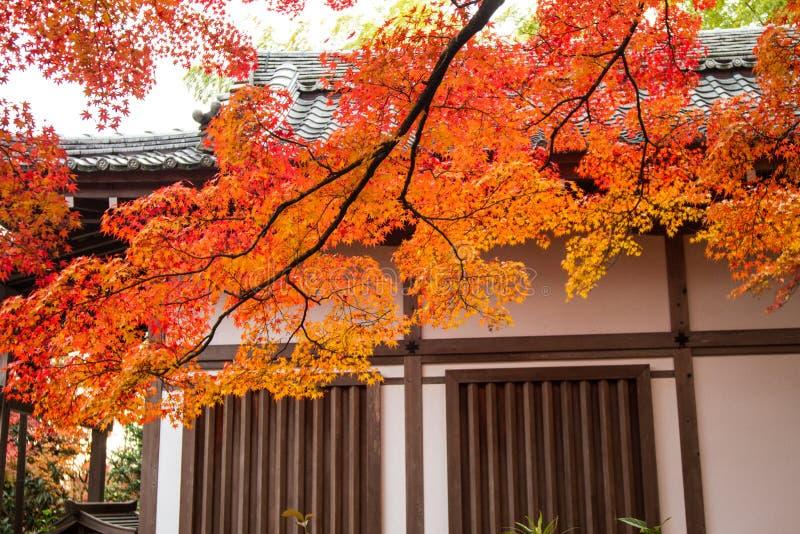 Der Herbst in Jojakko-jitempel, Kyoto, Japan stockbild