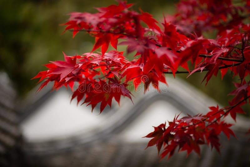 Der Herbst kommt (3) royalty free stock image