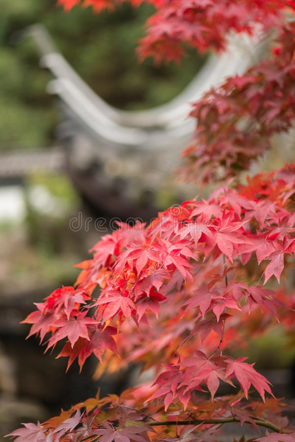 Der Herbst kommt (2) royalty free stock photography