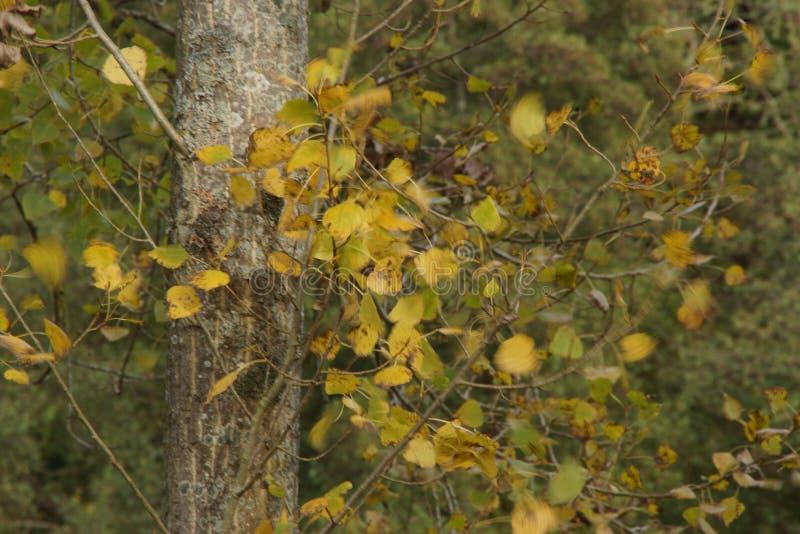 Der Herbst, seine Bäume mit Blattblättern von Farben Schönheit der Natur lizenzfreies stockfoto
