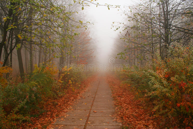 Der Herbstgehweg. stockfotos