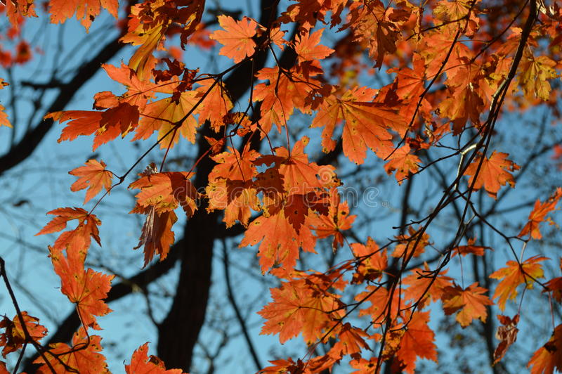Der Himmel des Herbstes lizenzfreie stockfotos