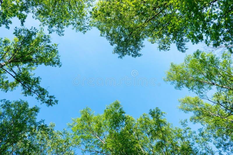 Der Himmel durch das Laub, schauen oben stockfoto