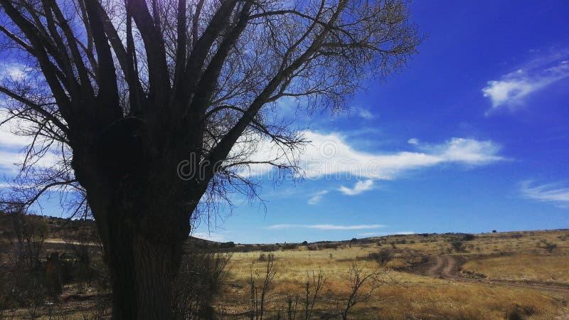 Der Himmel ist blau stockfoto