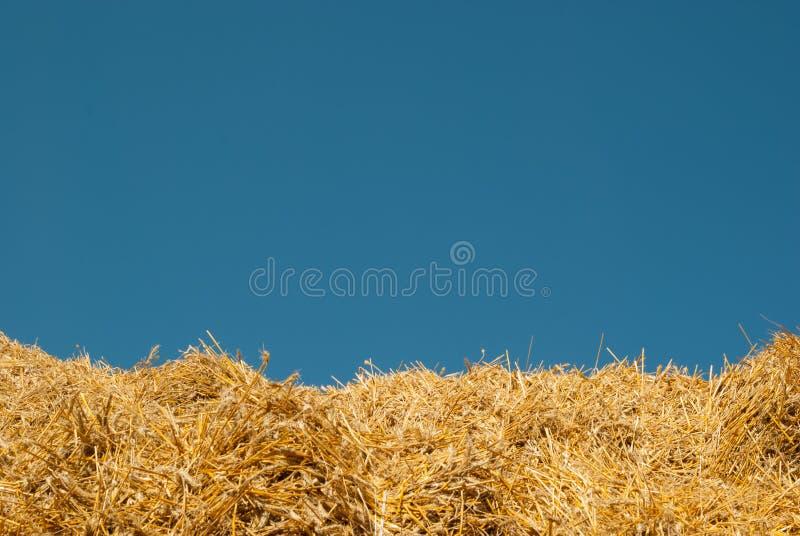 Der Hintergrund des blauen Himmels und des gelben Strohs die Sommerlandschaft ist für den Hintergrund der Aufschrift ideal stockfoto