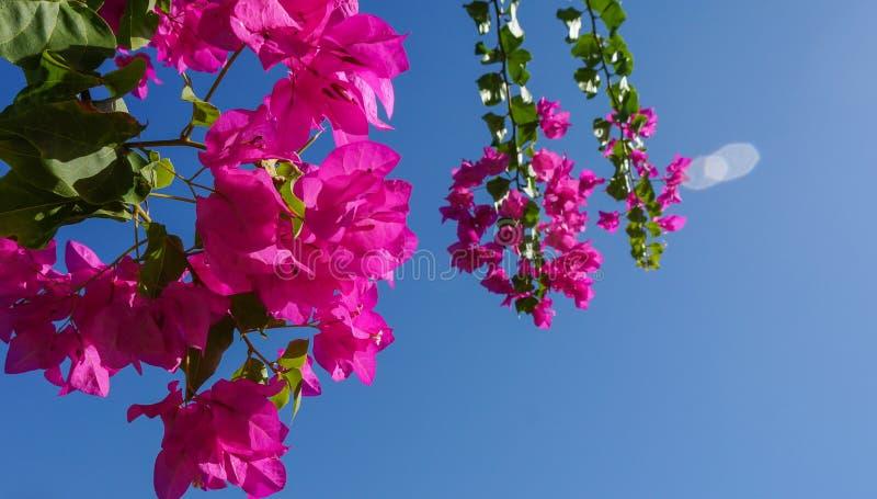 Der Hintergrund des Titels oder des Deckblattes auf Gartenbau- oder Sommerferien stockbild