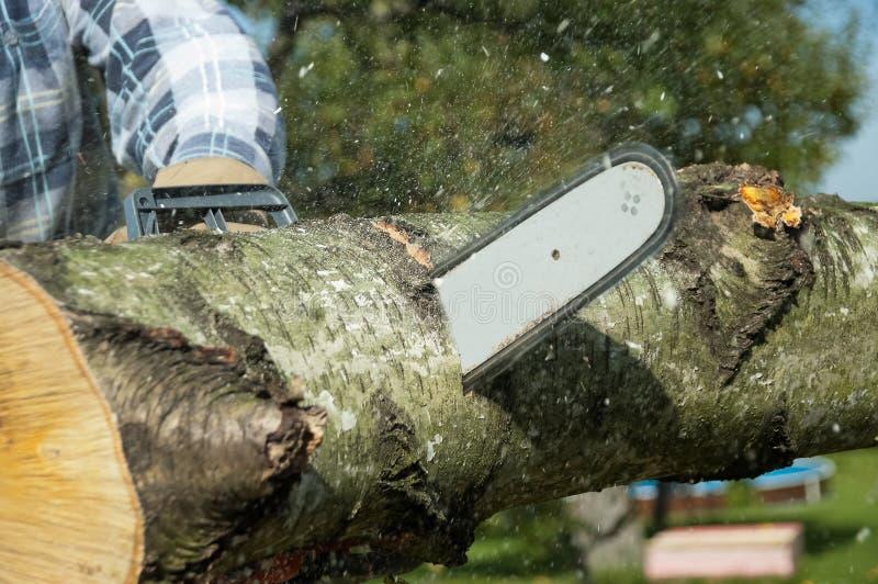 Der Holzfäller schneidet das Bauholz stockbild