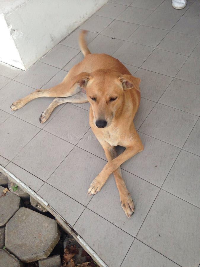 Der Hund lizenzfreie stockfotos