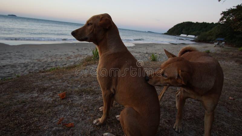 Der Hund auf dem Strand, der Hund in Meer stockfotos