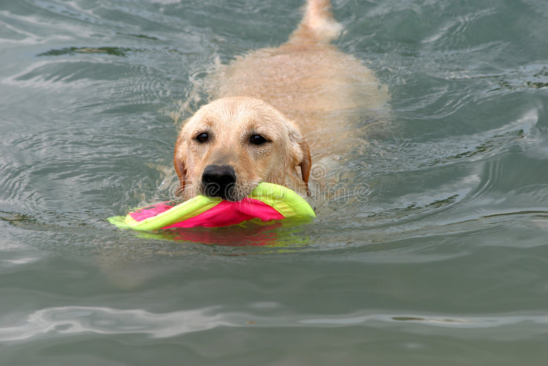 Der Hund, der im Wasser spielt lizenzfreies stockbild