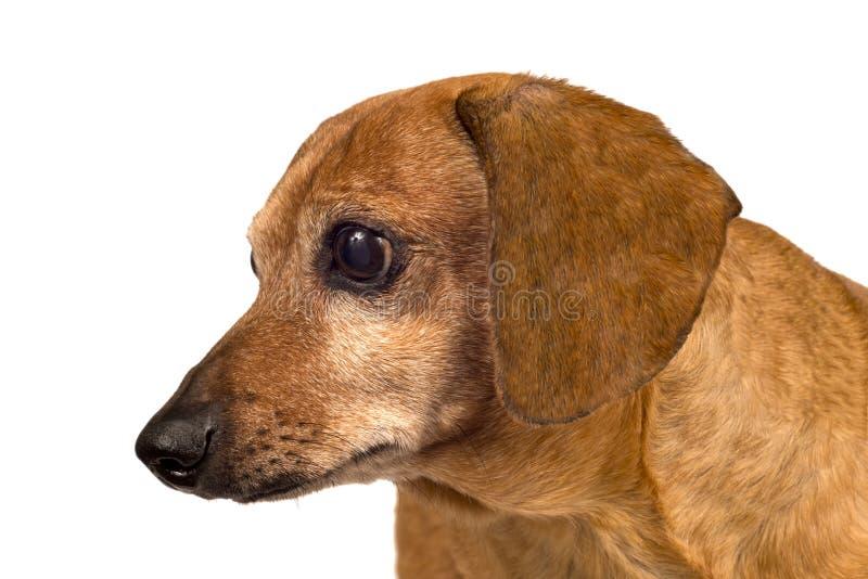 Der Hund, der seitlich schaut, schließen oben