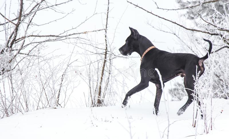 Der Hund geht stockfotos