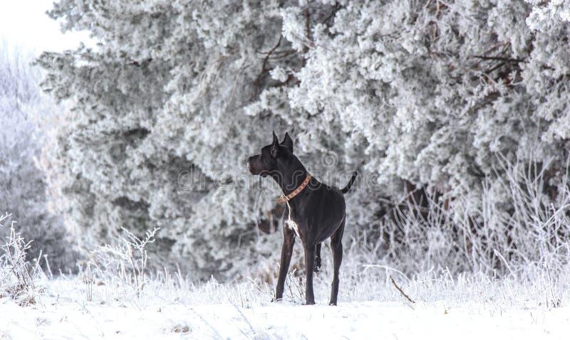 Der Hund geht stockfoto