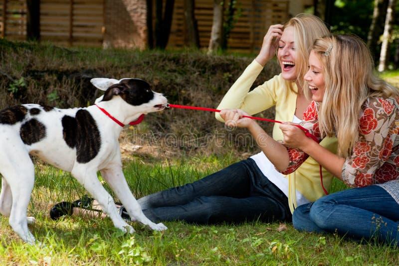 Der Hund gewinnt stockfoto