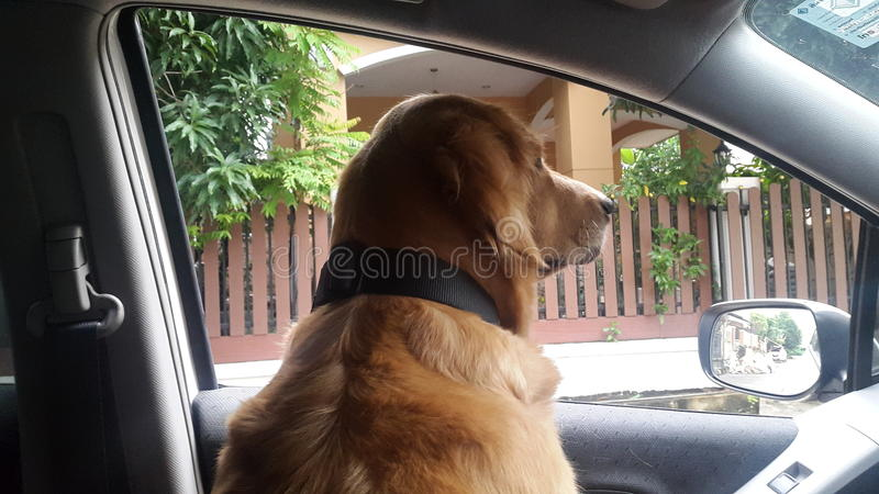 Der Hund im Auto stockbild