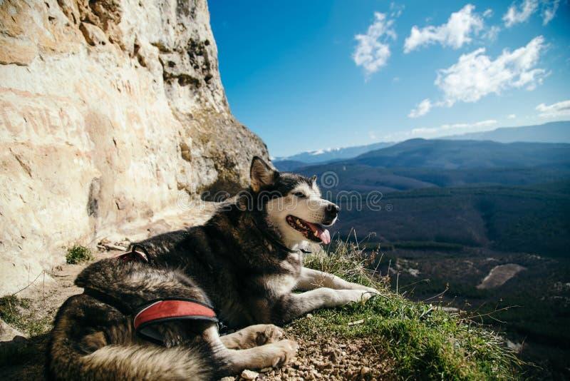 Der Hund legt am Rand einer Klippe lizenzfreie stockbilder