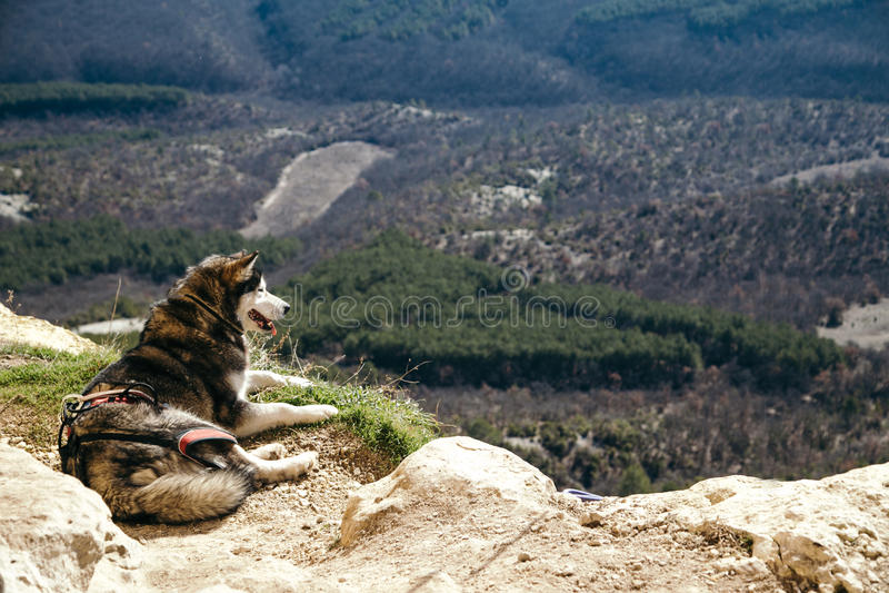 Der Hund legt am Rand eines Felsens stockbilder