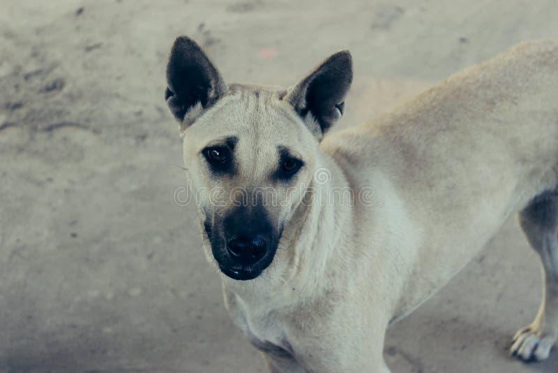 Der Hund nett lizenzfreie stockbilder