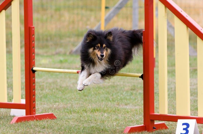 Der Hund springend am Beweglichkeitsversuch lizenzfreie stockfotografie