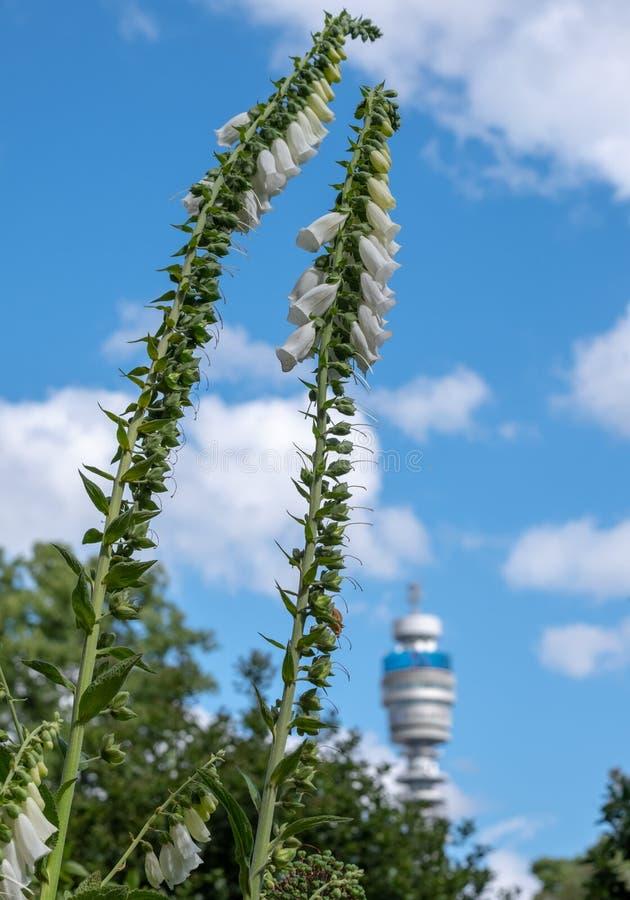 Der ikonenhafte BT-Turm besessen durch BT Group, gesehen vom Park-Quadrat und von Park Cresent-Gärten, London Großbritannien lizenzfreies stockbild