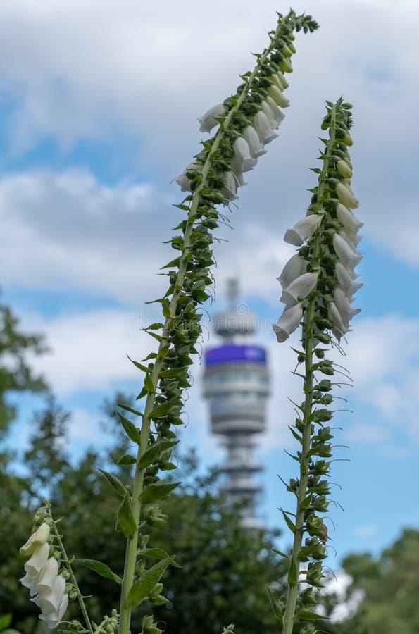 Der ikonenhafte BT-Turm besessen durch BT Group, gesehen vom Park-Quadrat und von Park Cresent-Gärten, London Großbritannien lizenzfreies stockfoto