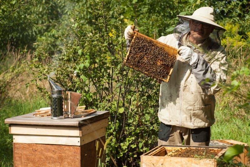 Der Imker betrachtet den Bienenstock Honigsammlung und Bienensteuerung lizenzfreies stockfoto