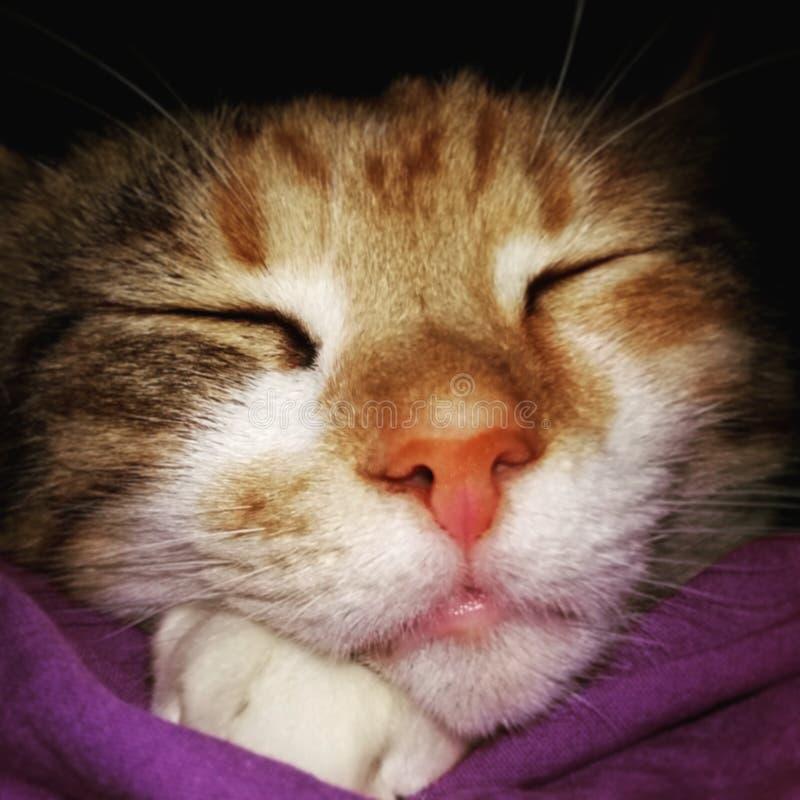 Der Ingwer-getigerten Katze Schlafens weißes closup Katze des Gesichtes lizenzfreie stockbilder
