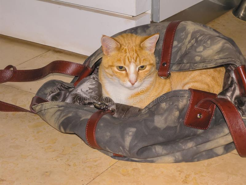 Der Ingwer und weißes Kätzchen, die in Grauem sich verstecken und bräunen Reisetasche lizenzfreie stockfotografie