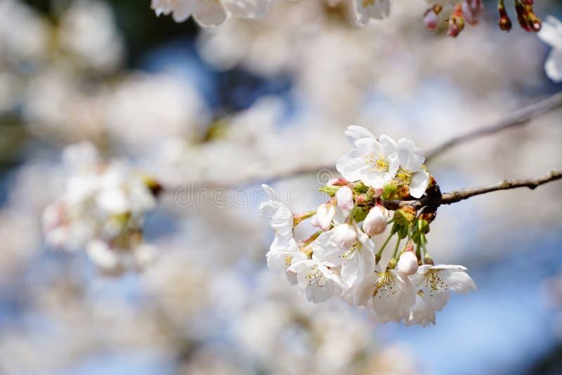 In der Jahreszeit des Frühlinges lizenzfreies stockbild