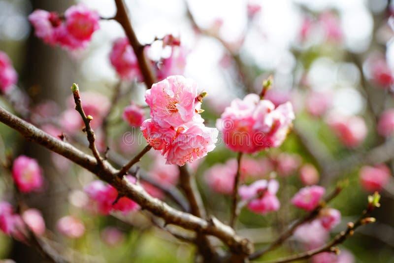 In der Jahreszeit des Frühlinges lizenzfreie stockfotos