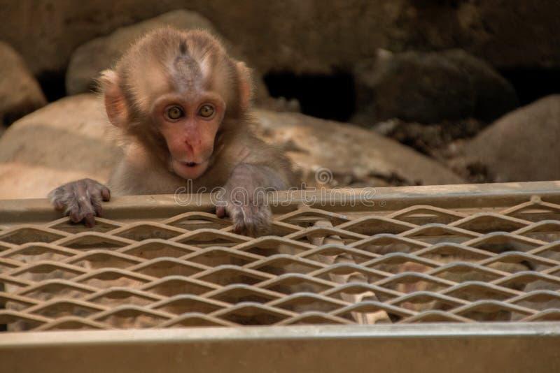 Der Jigokudani-Affe-Park ist ein großer Platz, zum von Affen in Ja zu sehen stockbilder